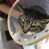 愛猫の5種ワクチン接種