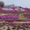 夢の芝桜 花夢の里ロクタン