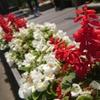 伊豆で見かけた花の写真を調べてみよう