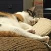 【愛猫日記】毎日アンヌさん#32