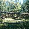 薪ストーブ始生代38 茶畑山で薪仕事④~くぬぎの倒木を発見する!