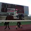 福島芝2000m(2歳戦)種牡馬別ランキング