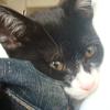 今日の黒猫モモ&白黒猫ナナの動画ー517