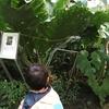 渋谷区ふれあい植物センターに行ってきた