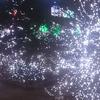 【350万球のイルミネーション】光の花園・足利フラワーパークに行ってきた