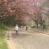 八重桜(*゚▽゚)ノ
