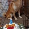 けい君の誕生日!