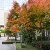 ビル街の紅葉