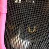 今日の黒猫モモ&白黒猫ナナの動画ー850