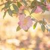 城南宮の山茶花2018、見頃や開花状況。