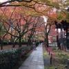 お散歩:紅葉狩り・落ち葉の絨毯も綺麗だったね。