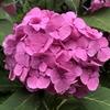 「母の日」とは?起源は?カーネーション以外に人気の花は?