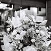 モノクロな花