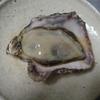 播州のウマいもの。冬の味覚は海のミルク、牡蠣です。