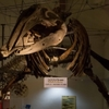 クジラの町太地町のくじら博物館に行ってきました!