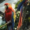 バイオドームで出会った生き物(その1・熱帯雨林)