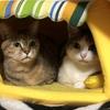 【猫ブログ】我が家で一番仲良しコンビ