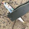 サビキ釣り イワシの刺身が最高に美味しかった