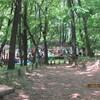 浅間公園ー里山のキンラン。