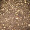 【家庭菜園】大根、小カブ、チンゲンサイ、発芽