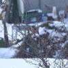 【見つけた図鑑◉野鳥】ベニマシコ