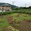 台風13号接近の雨の一日