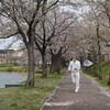 舞う桜プロジェクト2015