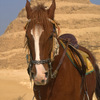 エジプトのサッカラで、100基を超える2500年前の棺が見つかった。またエジプトに行きたい!