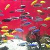 カワスイ川崎水族館は3歳以下の子連れにぴったり!感想・キッズルームなど紹介