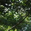 秋のいこいの森公園~木の実も小鳥も…~