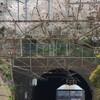 JR根岸線 横浜の桜と機関車 その1