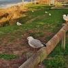 タウランガ 「パパモア・ビーチ」の海鳥たちとキャンプ場はすべてキャンピングカーで。。。