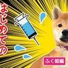 【柴犬・子犬】お家に来てからはじめてのワクチン【ふく姫】 Shiba Inu puppy  vaccination!