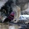 狼に恋した女とAIに恋した男が暴く、もうひとつの美女と野獣