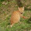 街中の動物:猫