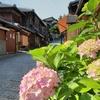 京都ぶらり 紫陽花の季節 2021