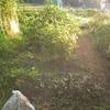 草刈タミヨ
