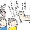 シニア猫の回復★おじーちゃん絶好調