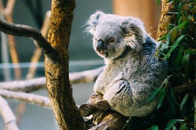 多摩動物公園で久しぶりにデートしてきた!