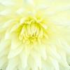 重陽の節句~粋な菊尽くし~