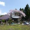 【番外編】萬龍寺のしだれ桜