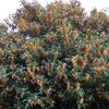 ご近所さんの花木たち 10月