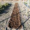 絹莢えんどうの畝作り