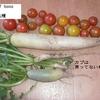 収穫 ダイコンなど・わらじハンバーグ