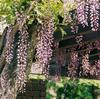 藤と日本家屋と 富士フイルム