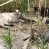道南の猫家族と職場のハラスメント