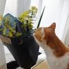 花のある生活にも憧れる