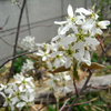 春の気配 ~その4~