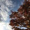 秋の紅葉デートはここで決まり!昭和記念公園をおすすめする理由
