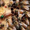 ミツバチの世界